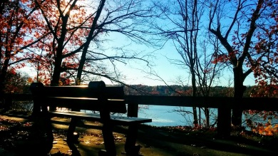 Bench with a View 1