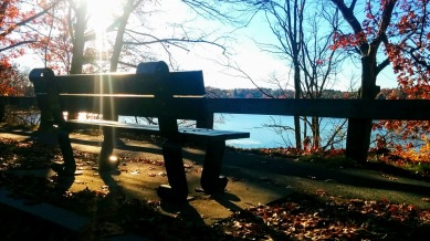 Bench with a View 2