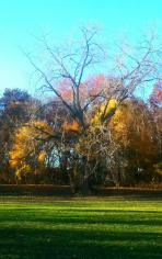 Fading Fall 3