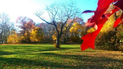 Fading Fall 4