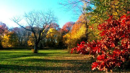 Fading Fall 1