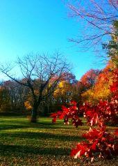 Fading Fall 2