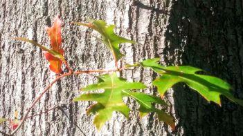 Orange on Tree Trunk 5b
