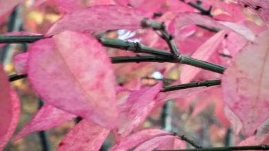 Fall Bokeh, Pink 1
