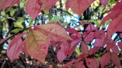 Fall Bokeh, Pink 2