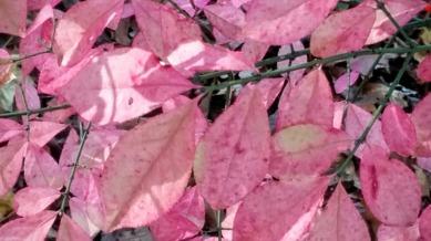 Fall Bokeh, Pink 3