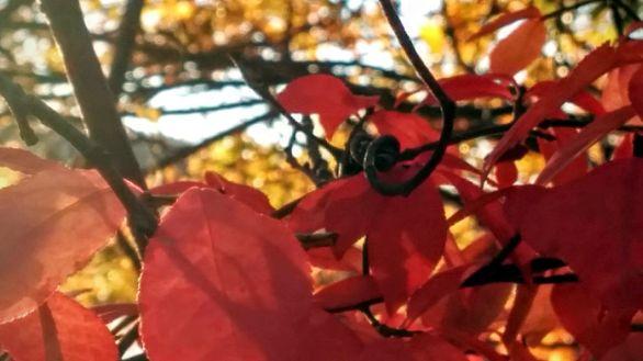 Bokehberry 4