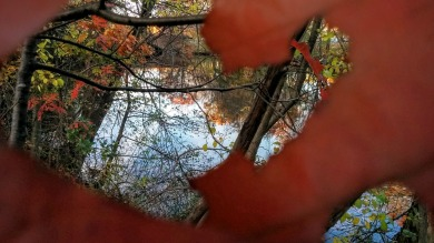 Leaves with a View 1
