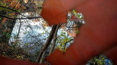 Leaves with a View 2