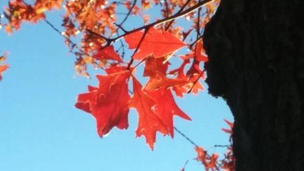 Autumn Red 7
