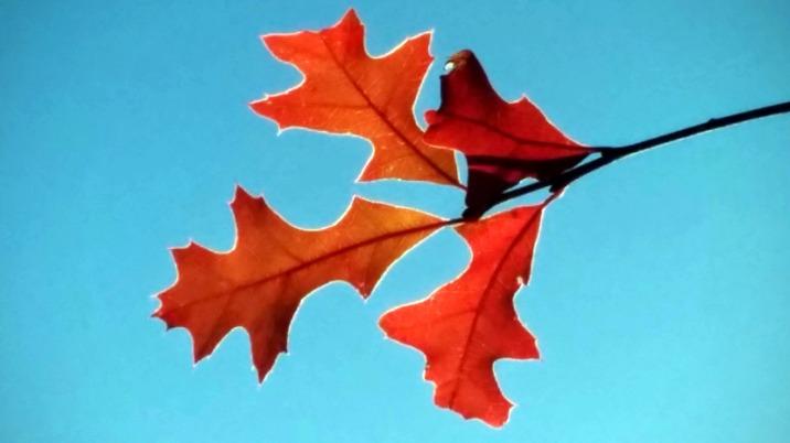 Autumn Red 3