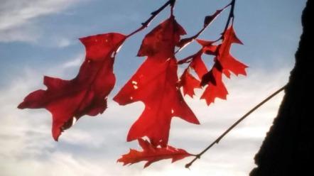 Autumn Red 5