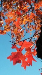 Autumn Red 6a