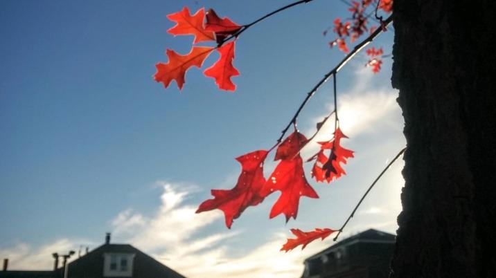 Autumn Red 2b