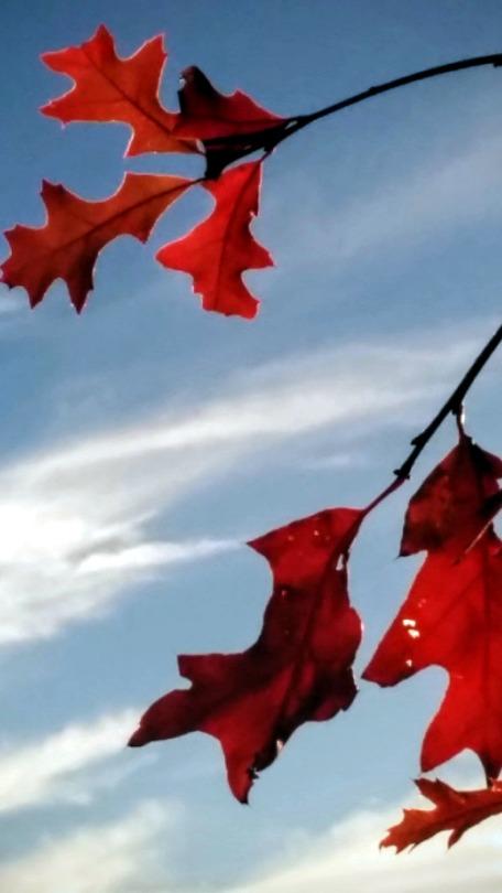 Autumn Red 4