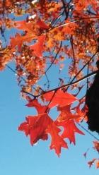 Autumn Red 6b
