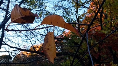 Remnants of Fall (A) 1