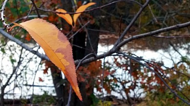 Remnants of Fall (A) 2