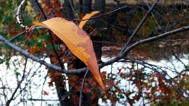 Remnants of Fall (A) 3