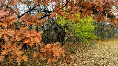 Remnants of Fall, Brown & Green 1
