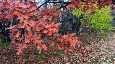 Remnants of Fall, Brown & Green 2