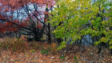 Remnants of Fall, Brown & Green 3