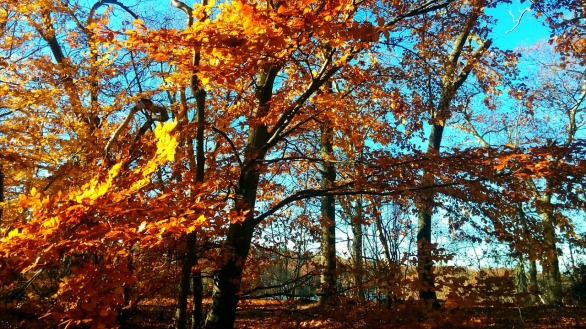 Fall at Mystic River Reservation 7