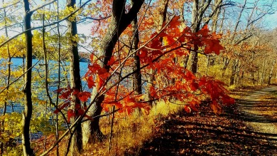 Fall at Mystic River Reservation 1