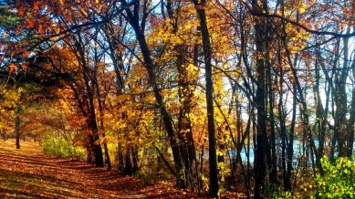Fall at Mystic River Reservation 2
