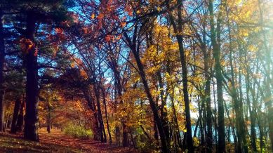 Fall at Mystic River Reservation 3
