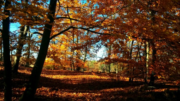 Fall at Mystic River Reservation 4