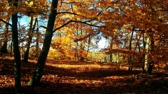 Fall at Mystic River Reservation 5