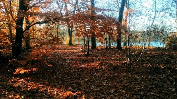 Fall at Mystic River Reservation 8