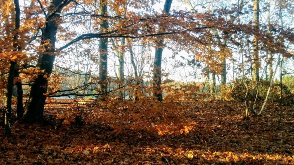 Fall at Mystic River Reservation 9