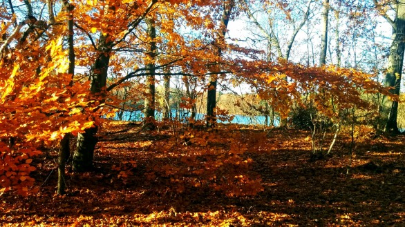 Fall at Mystic River Reservation 6