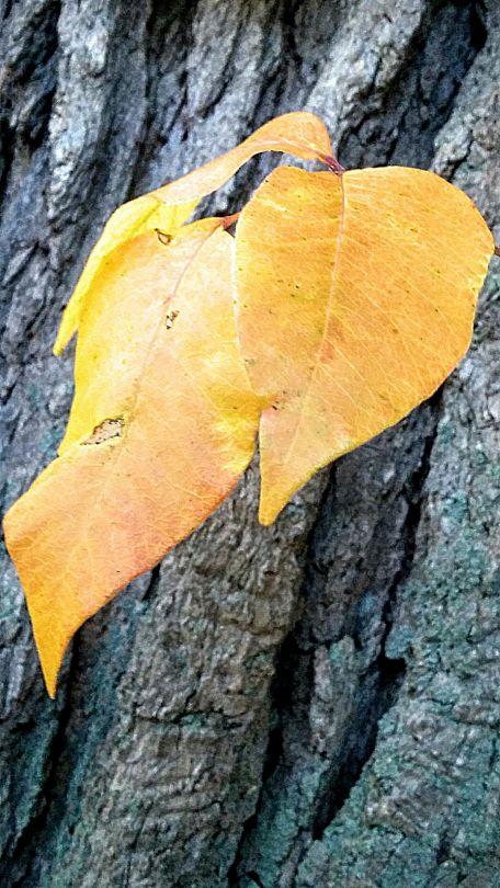 Yellow on Tree Trunk 2c