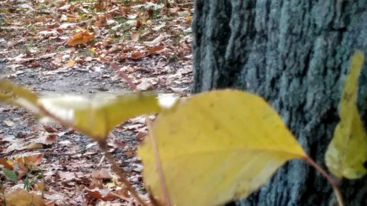 Yellow on Tree Trunk 3b