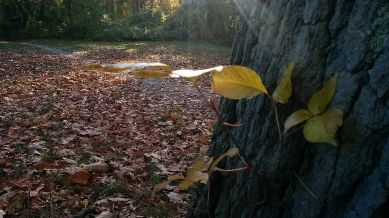 Yellow on Tree Trunk 1c