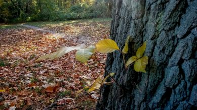 Yellow on Tree Trunk 1b