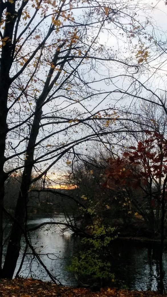 Portrait of a River (Fall) 1