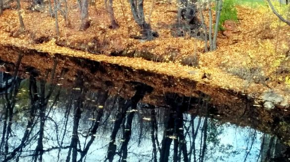 Fall Reflects in Mystic River 7