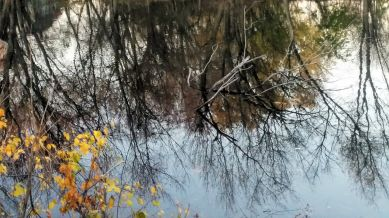 Fall Reflects in Mystic River 2