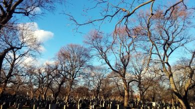Cemetery Afternoon 1