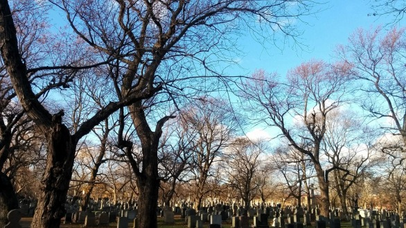 Cemetery Afternoon 4