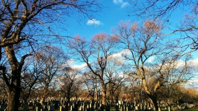Cemetery Afternoon 3