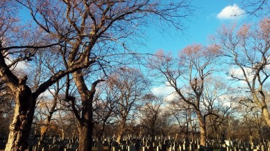 Cemetery Afternoon 2