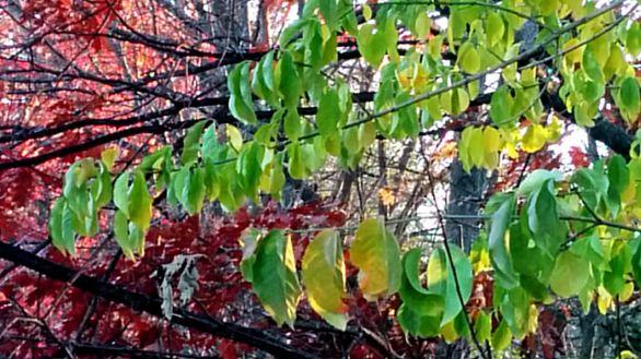 Leaf Chandelier 1
