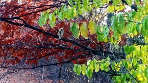 Leaf Chandelier 2