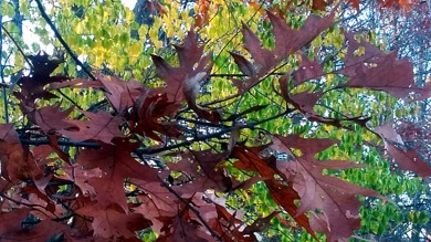Leaf Sculpture 1