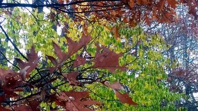 Leaf Sculpture 2